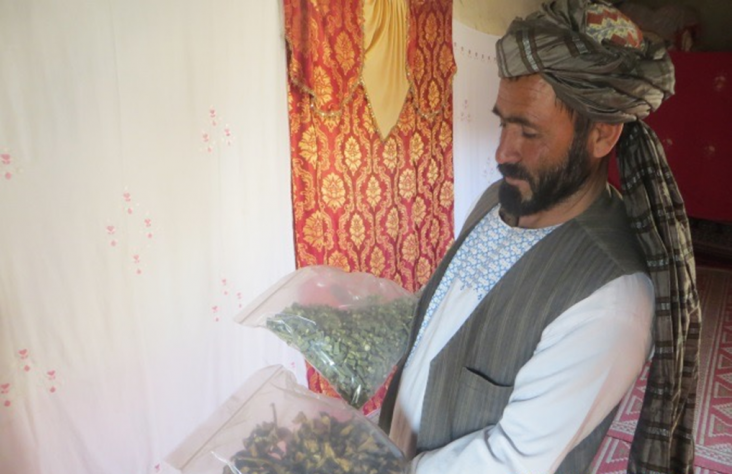 Sayed Abdul Karim, a farmer from Zhari district of Kandahar province. Photo: USAID